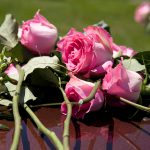 Close up Pink Roses on top of Casket